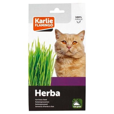 Flamingo Cat Grass